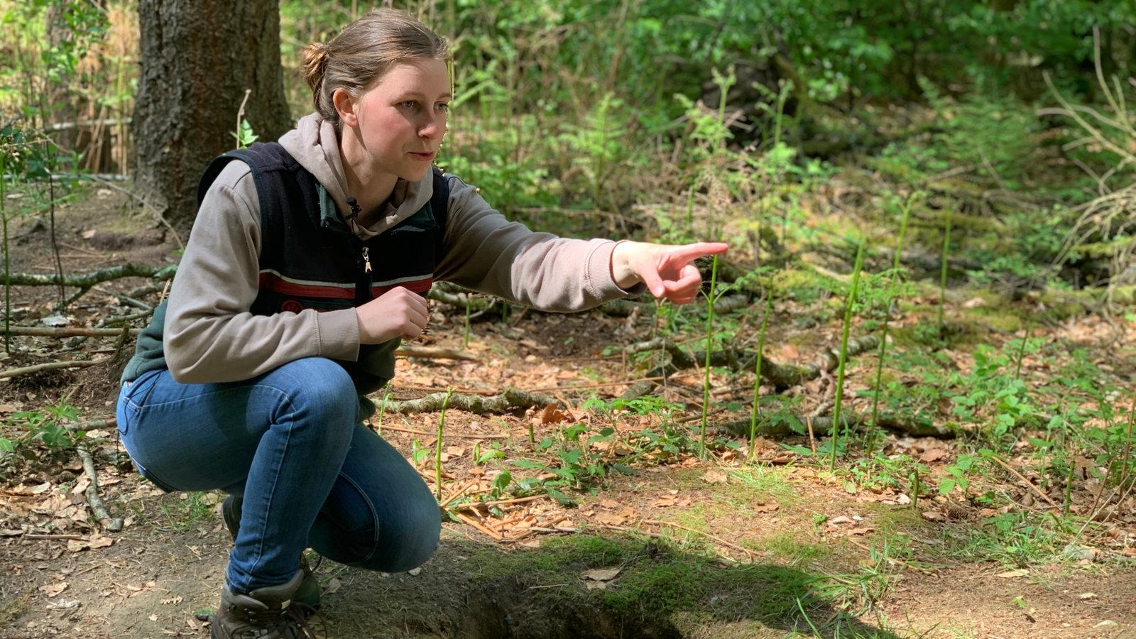 Wald-Fick Mit Einem Fremden